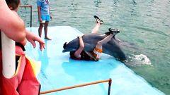 Dolphin Hump